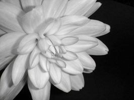 07 - Flower #2 by TheClickClique