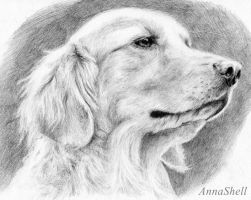 Labrador Retriever by AnnaShell
