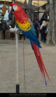 Scarlet Macaw 01 by SalsolaStock