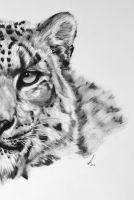 Half series-Snow Leopard by salt25