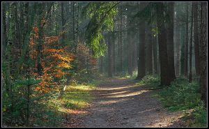 Another November forest walk by jchanders
