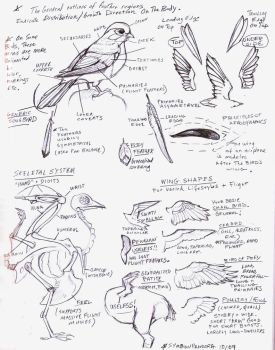 Bird wings tutorial sketch by eva-st-clare