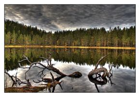 Lake in the deep forest by AnteAlien