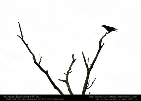 Animals 033 - Bird Silhouette by Katibear-Stock