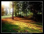 Sea of Leaves by My-Shadows-Limit
