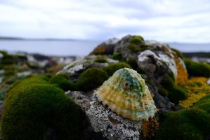 Shell and Sea by Ikonion