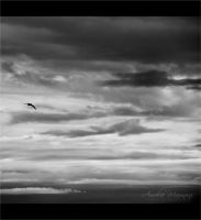 Just a bird in the sky by Helliew