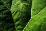A Green and Pleasent Land by EarthHart