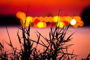 Grass and Lights by MarcBraner