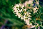 Time for Thyme... by BlueLunarRose