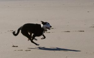 dog 24: sprint by cyborgsuzystock