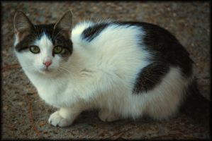 Campground Kitty's Portrait by LadyAliceofOz