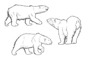 Polar Bear Lines by ReQuay