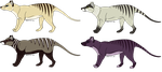 Thylacine Adopts *Open!* by ShiptasticThree
