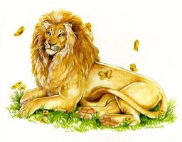 Peaceful Lion by Hbruton