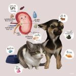 Pet Kidney Disease by Jitmett