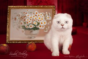 Cat and interior #3 by Katrin-Elizabeth