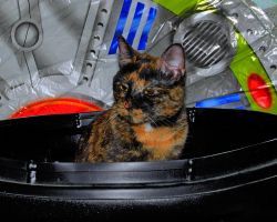 Camouflage Canister Kitty by greenunderground