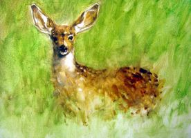 deer by alrasyid