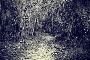 Down the Creepy Trail by DonLeo85