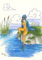 Kingfisher by luthien368