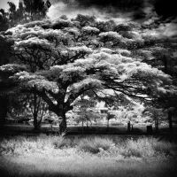 Thai Schoolyard infrared by MichiLauke