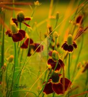 More Wildflowers by embethe