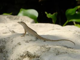 Le lezard by lamayoush