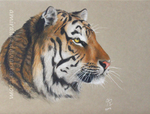 The Tiger (Color pencils) by Amayensis