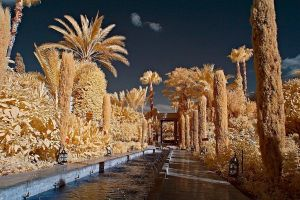IR Morocco Trees 2 by Okavanga