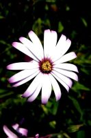 """"""" Wild Daisy """" by Glamour-and-Abuse"""