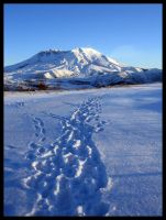 Tracks to St. Helens by sugar6