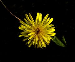 .:Happy Birthday Zombie:. by HA91