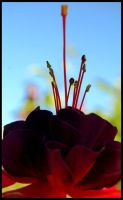 Reaching for the sky by Marthep