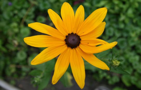 Yellow Flower by daggets