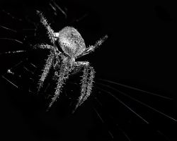 Spider by obscurityimages