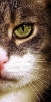 Eye of a tiger? by narare