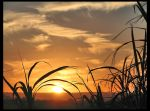 Sunset over Canefields by Sun-Seeker