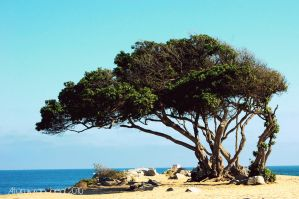 Sea Tree by atomicranchgal