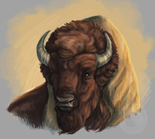 Buffalo Sketch by Simkaye