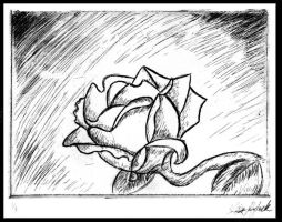 Rose Etching by moonelfpersephone