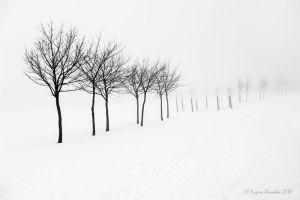 Trees In The Snow by AgenttSmith