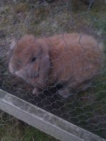 My love, my bunny Ludde by ludde1994