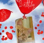 Happy Birthday! by lucytherescuedcat