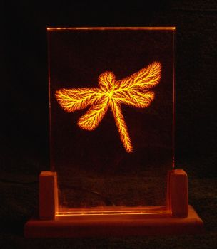 Amber Dragonfly by Shockfossils