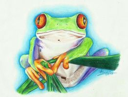 Frog by AshiMonster