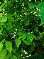 Green Leaves Part II by POETRYTHROUGHLENS