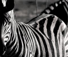 Stripes by UbhejanePhotographic