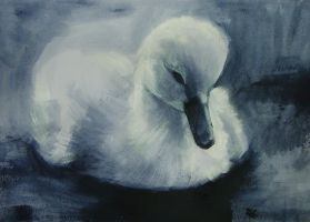 Young Swan 2 - 16052012 by AEnigm4
