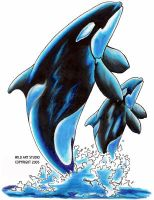 Mother and Calf Orca Killer Wh by Ashwin24